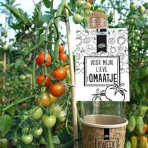 Kweek je cadeau lieve Tomaatje